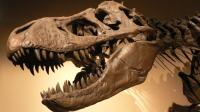 exposition Palais_de_la_Decouverte_Tyrannosaurus_rex_p1050042