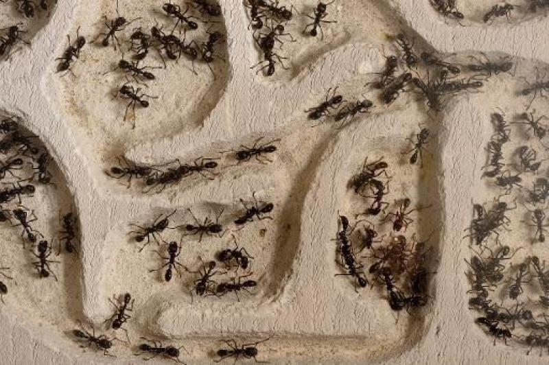 fourmis expo